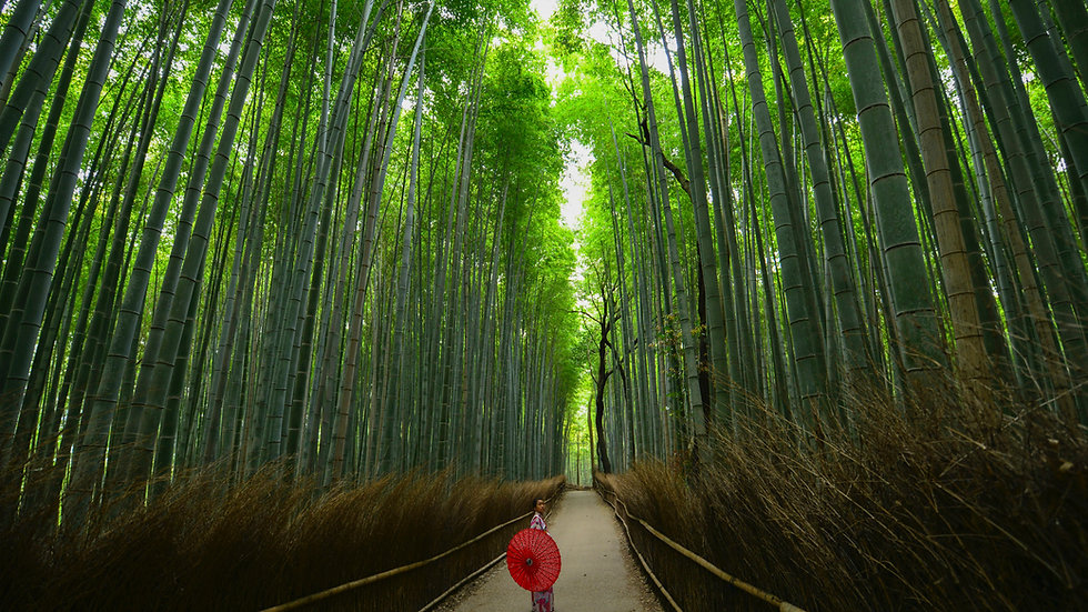 Traditional and Modern Japan [BA] 9 days