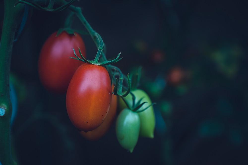Tomaten für den Sugo