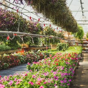 Get ready for spring planting at local greenhouses and nurseries