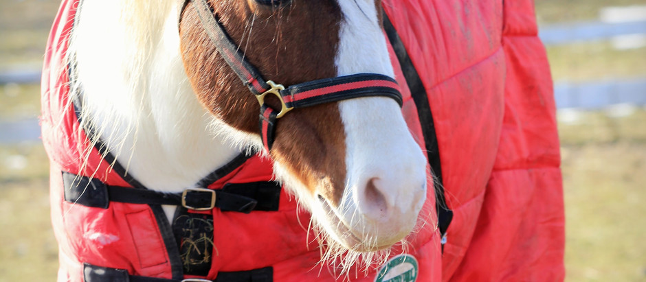 6 gift ideas to get an equestrian this winter!