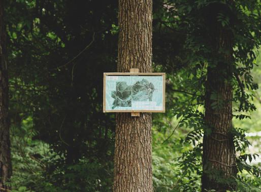 În Republica Moldova va fi creată o hartă a plantelor melifere