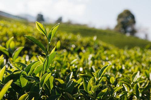 Mitchell's Tea Farm Tour: ½ Day