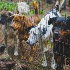 6 Ways to Prepare Your Dog for a Stay at a Pet Boarding