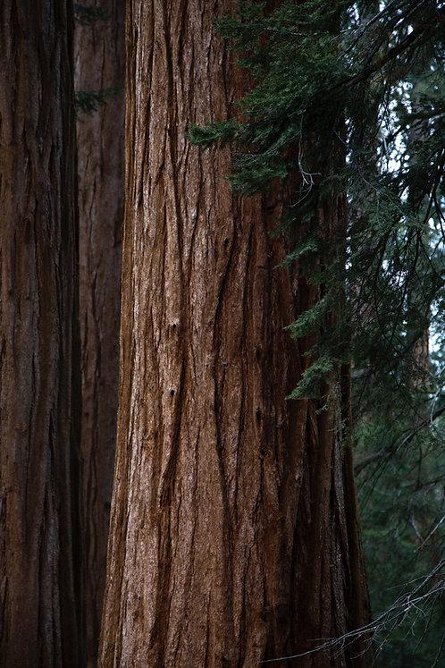Redwood + Cedar