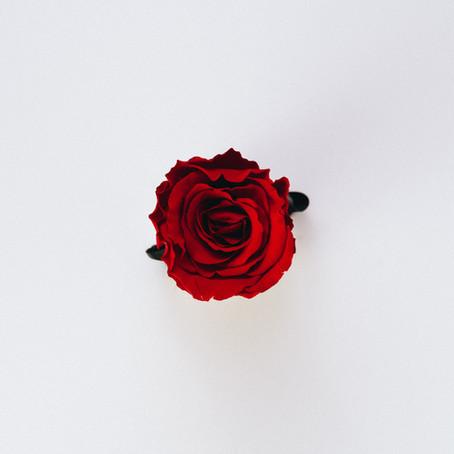Allison: Journey of a Rose