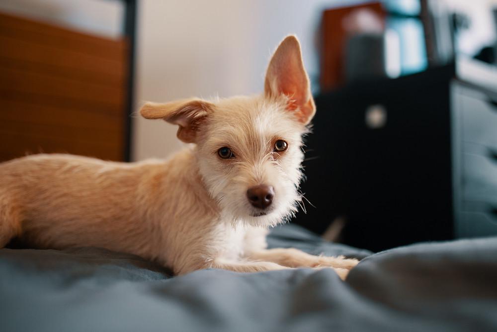 decorative photo of dog