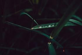 Image by Adrian Infernus