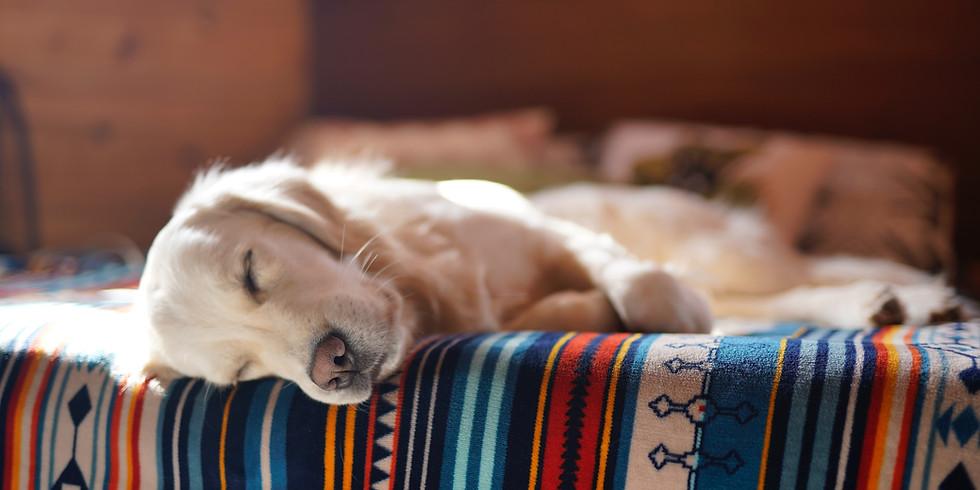 Animal Reiki & Gentle Yoga