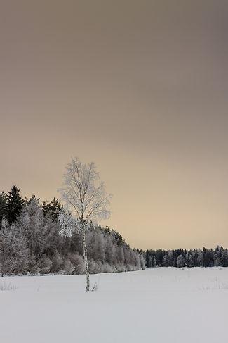 Image by Jukka Heinovirta
