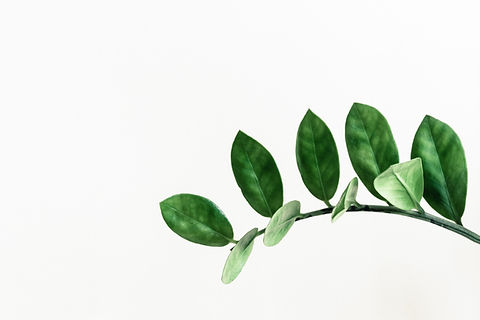 Image of branch of leaves