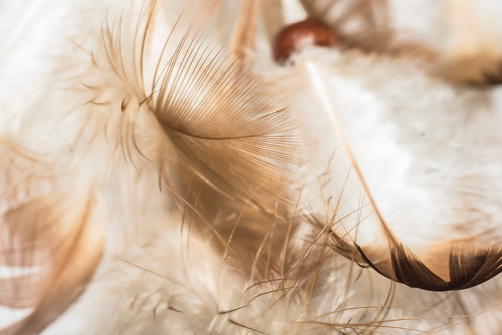 cream colored feather background