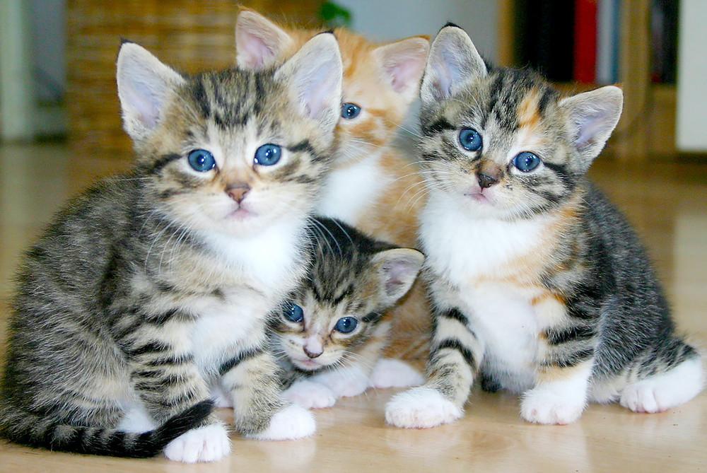 Katzenpersönlichkeit