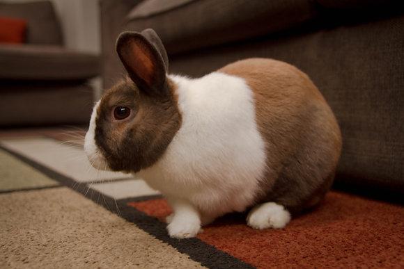 Kurs  Podstawy lagoterapii - terapia i edukacja z udziałem królików