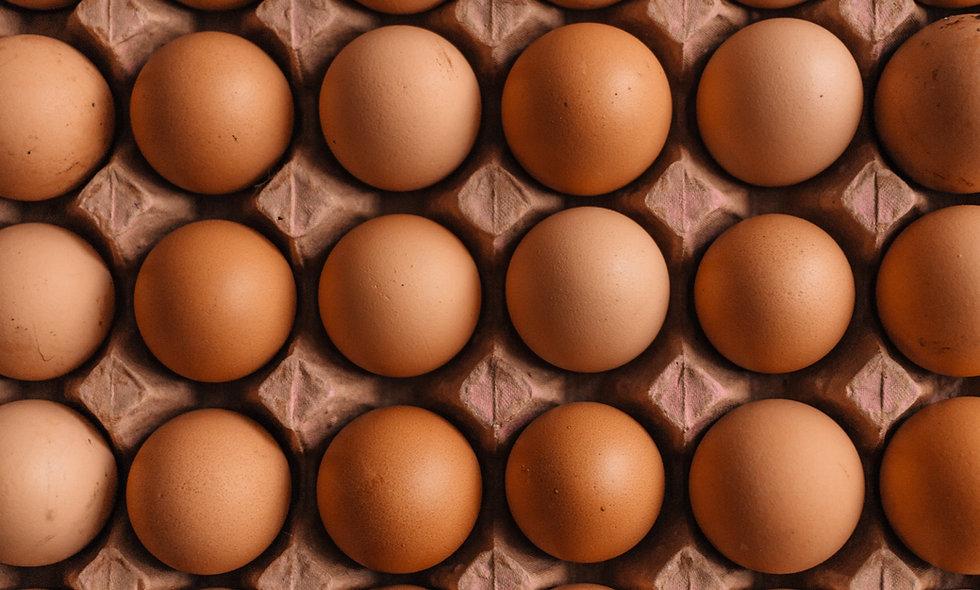 Eggs-perimental Science