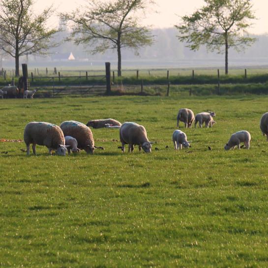 Limburgers genieten van een stralend zonnig en zacht weekend