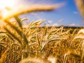 Sustainable: documentário sobre o movimento da comida sustentável