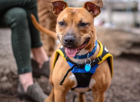 Как да третираме ухапване от кърлеж при кучетата