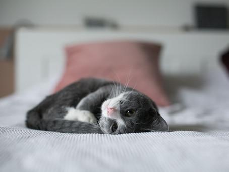 Wie kannst du die Bindung zu deiner Katze verbessern?