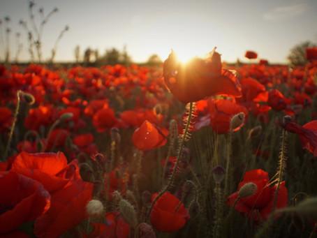 ANZAC DAY - War! Why Do We Do It?