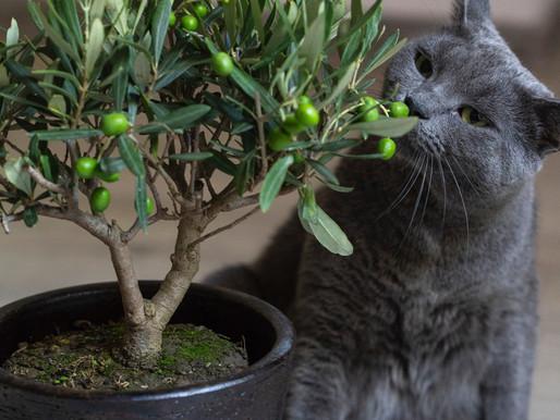 5 plantes toxiques pour vos animaux de compagnies
