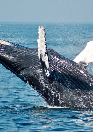 Where to Spot Whales in Byron Bay