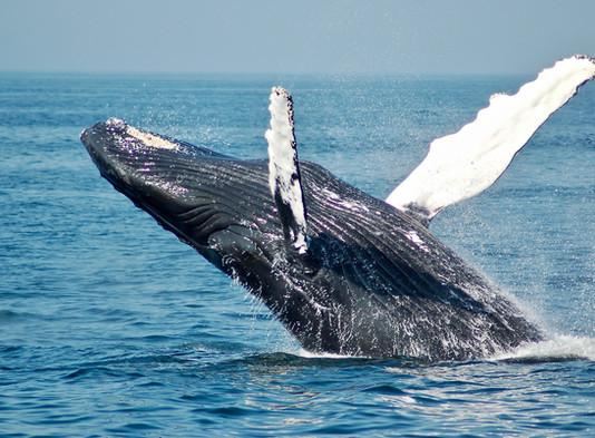 'World Oceans Day' 4th June