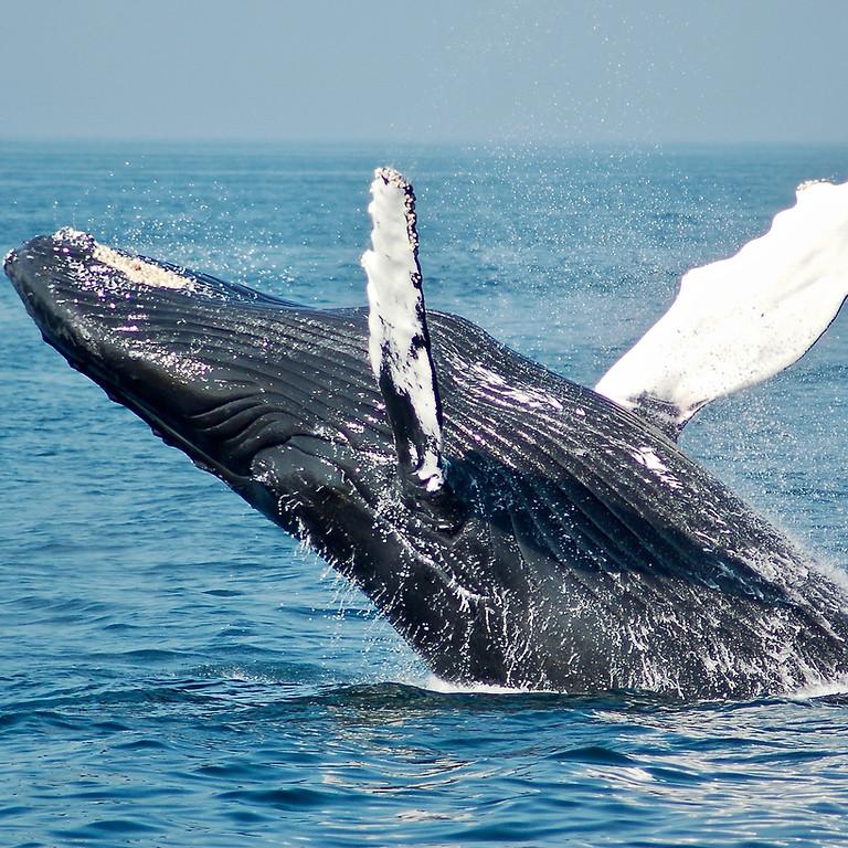 Whale Watchers - Alaska