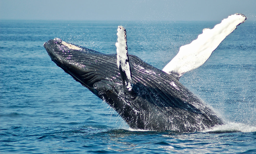 Whales Write: Creative Expression and CVC Practice