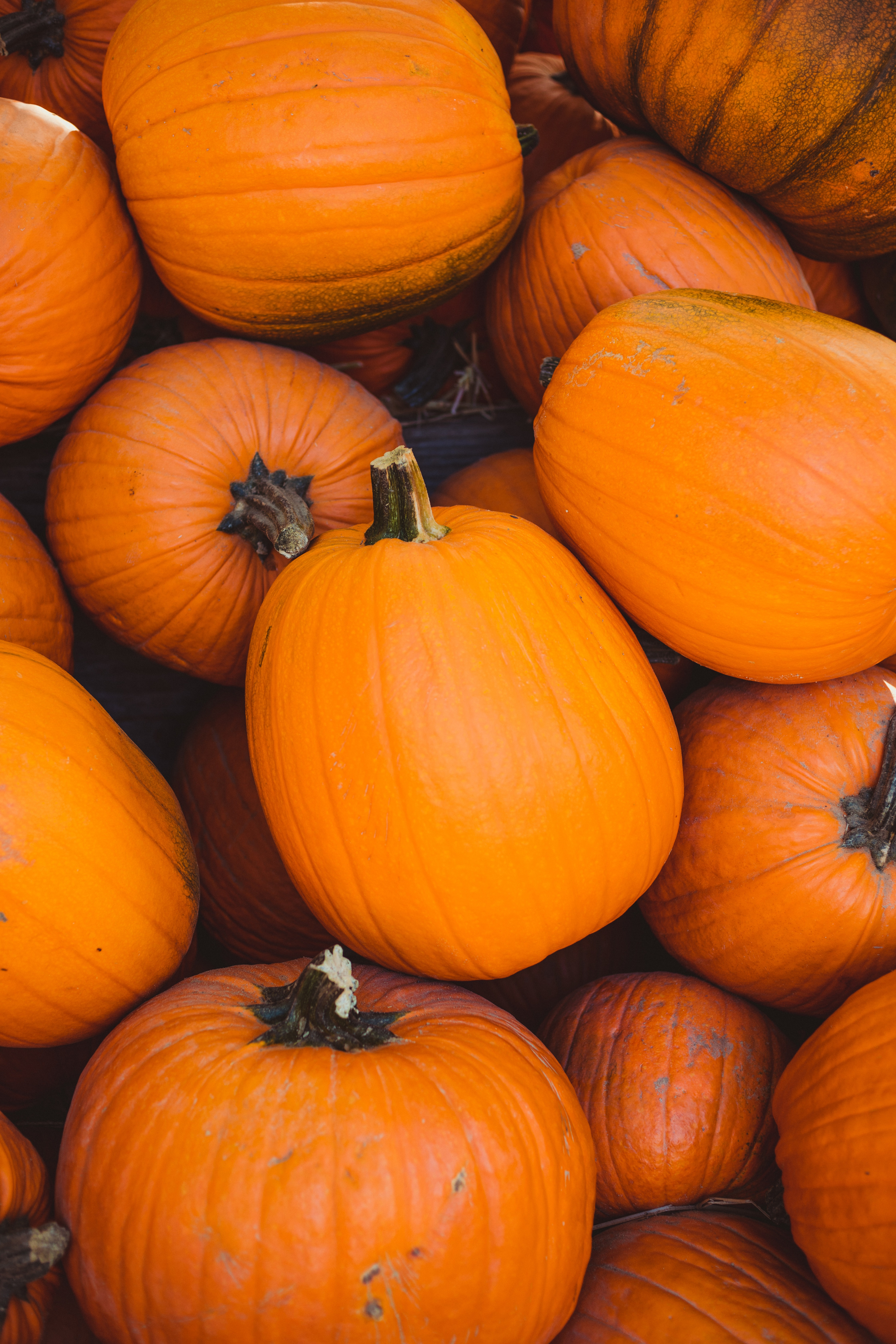 Pumpkin Painting Volunteer Shift 2