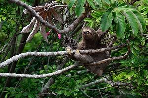 Rencontres atypiques au Costa Rica
