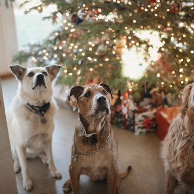 Seven Tips to help you and your pets safely enjoy the holidays