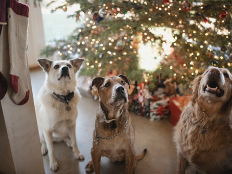 Ten tips for pet owners this Christmas