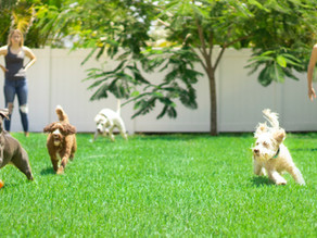 8 Surprisingly Harmful Things That Can Be Found in Your Own Backyard!