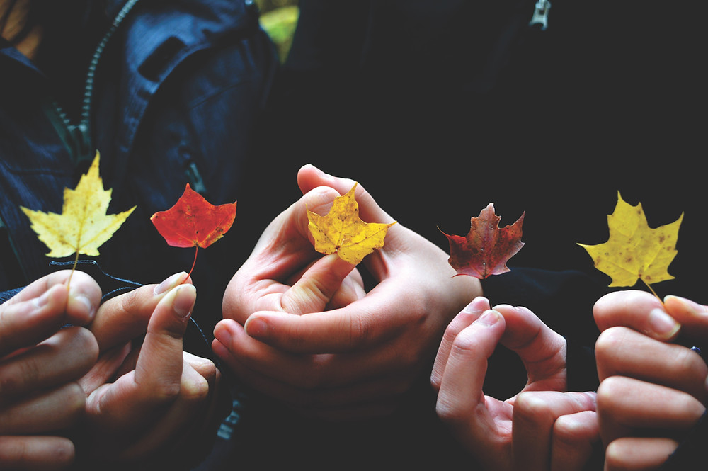 five fall leaves, fall color, autumn leaves, leaf, real estate