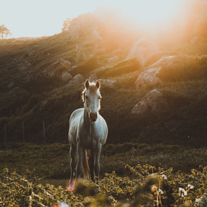 How Horses Helped My Anxiety