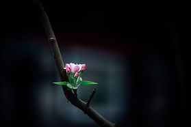 Image by Alaric Duan