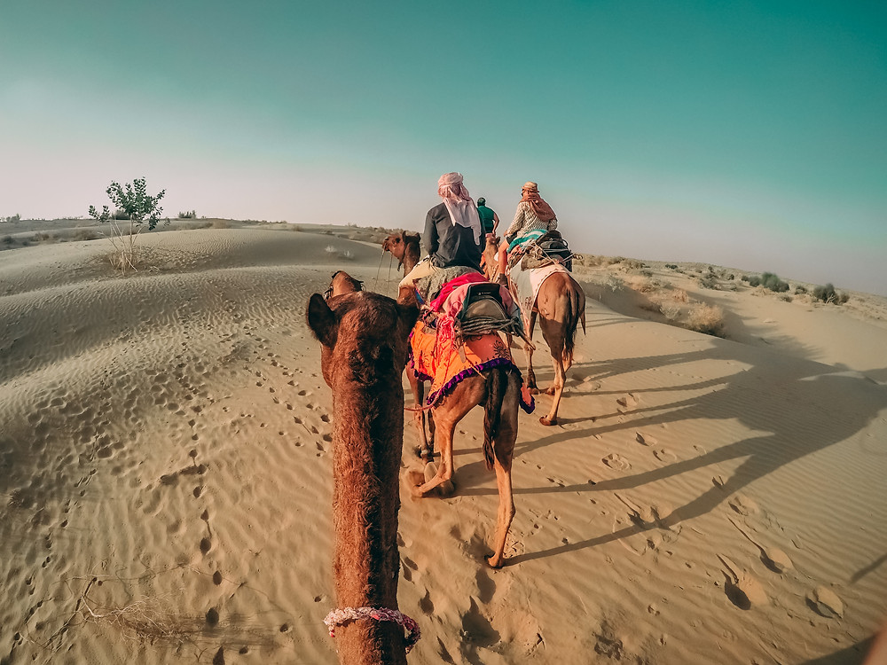 Camel rides in the deserts of Rajasthan