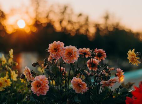 Growing Great Gardens 2020