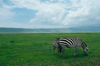 DE TANZANIA A ZANZIBAR
