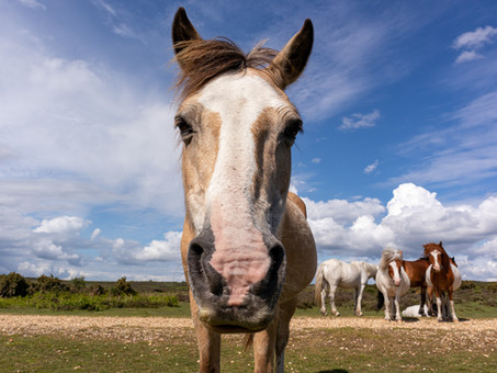 EQUINE INSURANCE: A Small Price for Peace of Mind