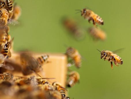 מה עושות הדבורים בחורף?