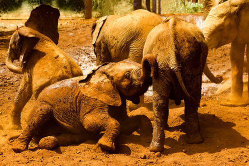 Sheldrick's elephant orphanage and Giraffe center