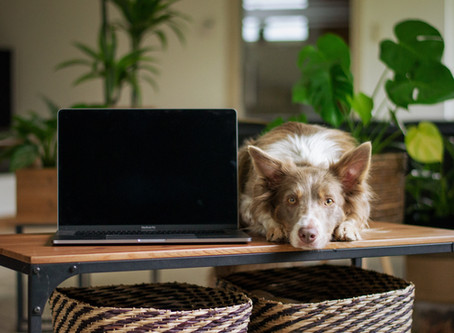 How to create the perfect working-from-home routine for you and your dog