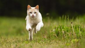 Трава для кошек и почему они ее любят