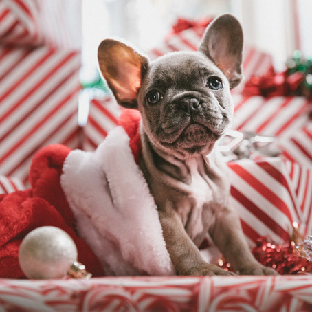 Gifts for Puppies - Last minute shopping for your dog