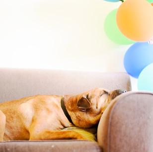 熱気球体験Q&A「ペットも一緒に乗れますか」
