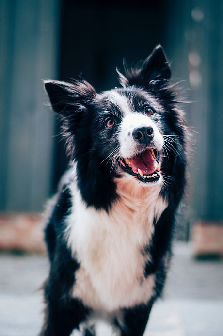 Animal Communication Ginger Hendry