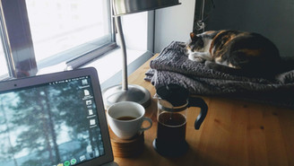 Working from home with your cat