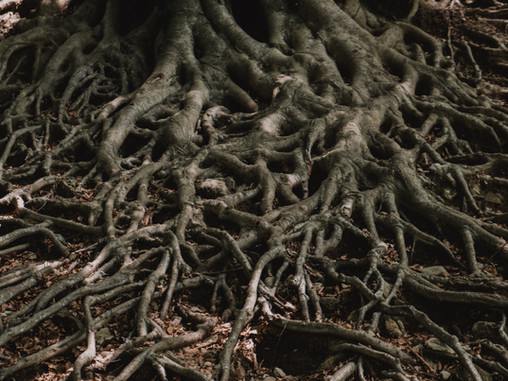 Root of SCJ