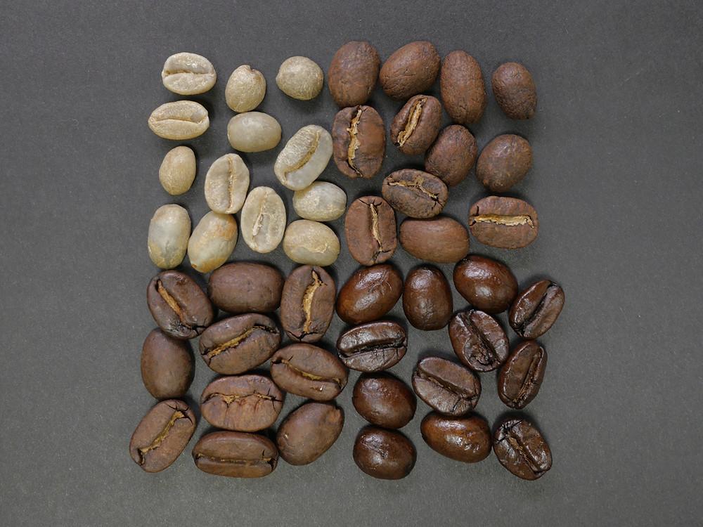 Coffee seed Nutz4Coffee